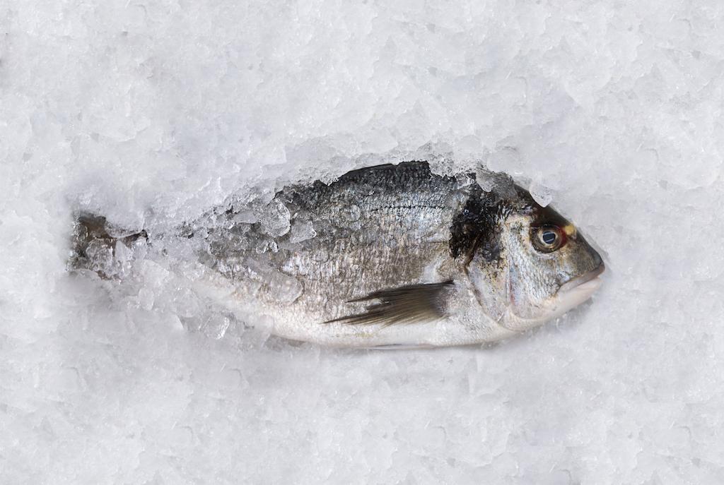 Monográfico pescados